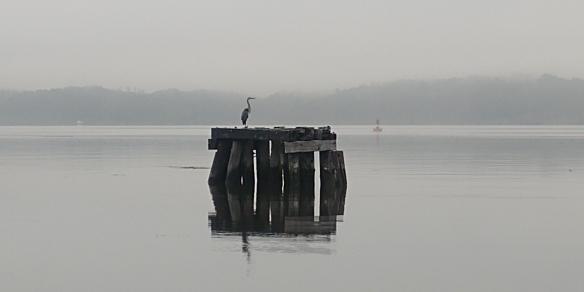 heron at kingston point
